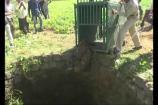 Video: బావిలో పడిపోయిన నాలుగేళ్ల చిరుత పిల్ల