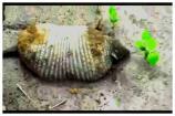 Video: మహబూబాబాద్ జిల్లాలో కనిపించిన వింత జీవి ఆలుగు
