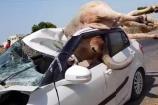 Video: ఎద్దును ఢీకొట్టిన కారు..గాల్లో ఎగిరి టాప్పై పడడంతో..