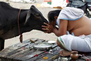 #Makar Sankranti 2019: కనుమ విశిష్టత.. ఈ రోజున ఏమేం చేస్తారంటే..